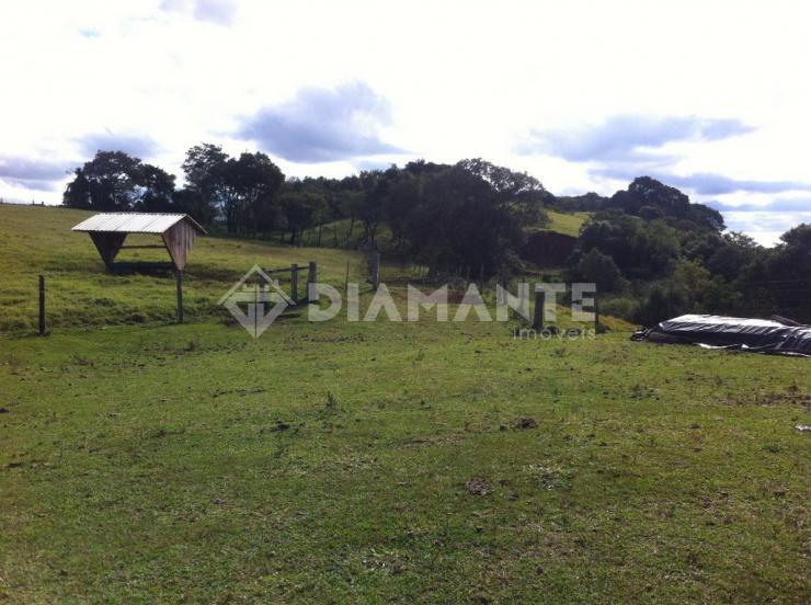 Fazenda Formada, Ótima Localização, com 186 Hectares no Paraná